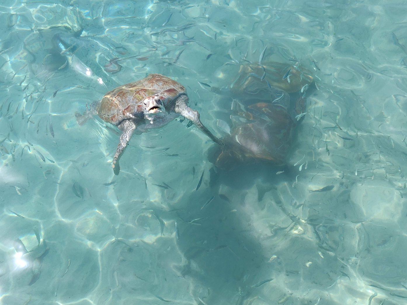 Playa Grandi Turtle